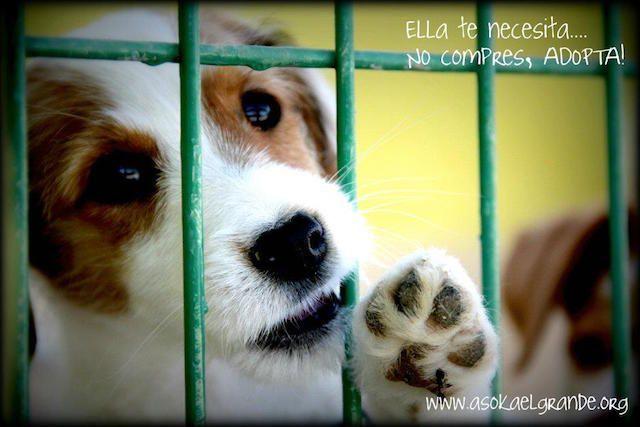 Asociación para la Defensa y Protección de Animales